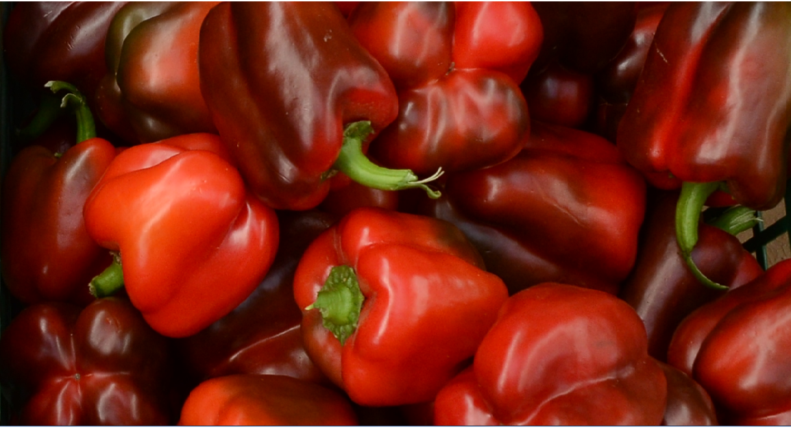 Seedforth Agro -Red Peppers