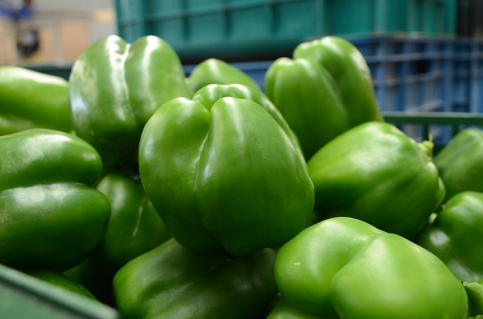 Seedforth Agro Green Peppers