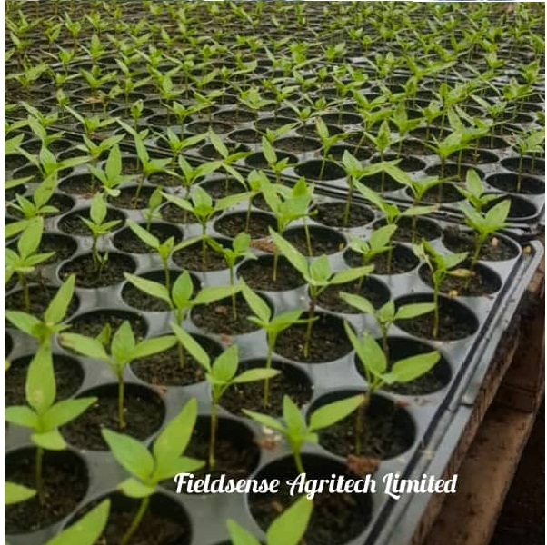 Fieldsense Agritech Ltd